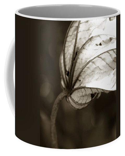Flower Coffee Mug featuring the photograph Leaf by Norah Holsten
