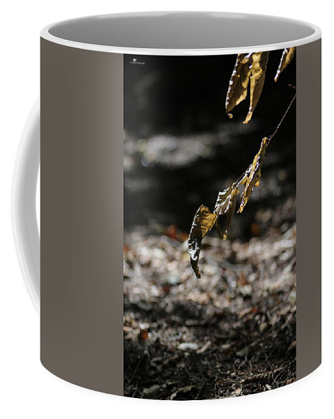 Fall Coffee Mug featuring the photograph Leaf Of Fall by Kate Wiles