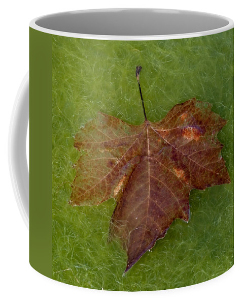 Abstract Coffee Mug featuring the photograph Leaf On Algae by Andrew Ford