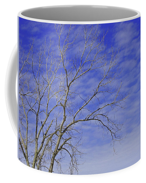 Branches Coffee Mug featuring the photograph Leafless by Ann Horn