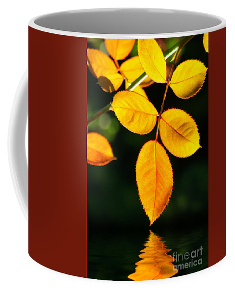 Agriculture Coffee Mug featuring the photograph Leafs Over Water by Carlos Caetano