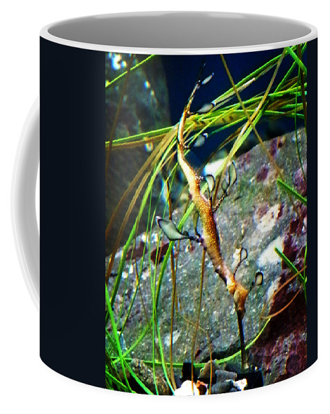 Paintings Coffee Mug featuring the photograph Leafy Sea Dragon by Anthony Jones