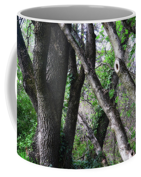 Forest Coffee Mug featuring the photograph Lean On Me by Donna Blackhall
