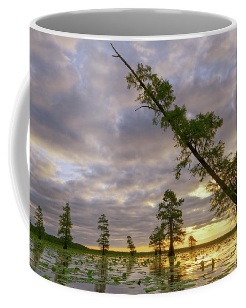 2016 Coffee Mug featuring the photograph Leaning Cypress by Robert Charity