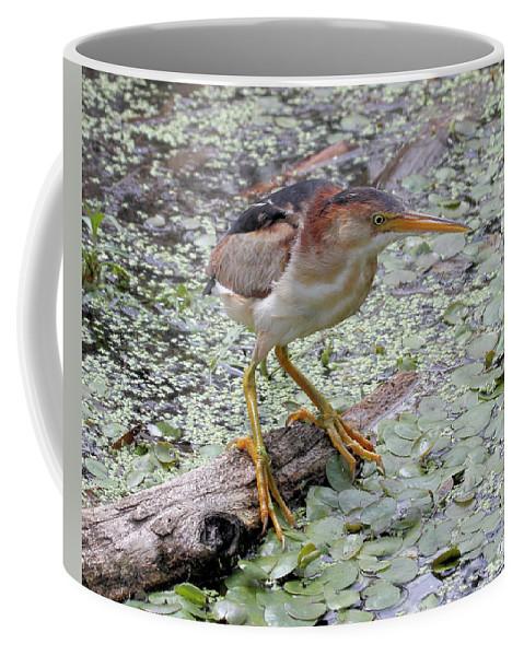 Bird Coffee Mug featuring the photograph Least Bittern by Doris Potter