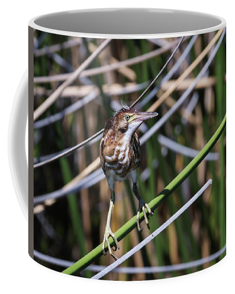 Least Coffee Mug featuring the photograph Least Bittern, Juvenile-img_401417 by Rosemary Woods-Desert Rose Images