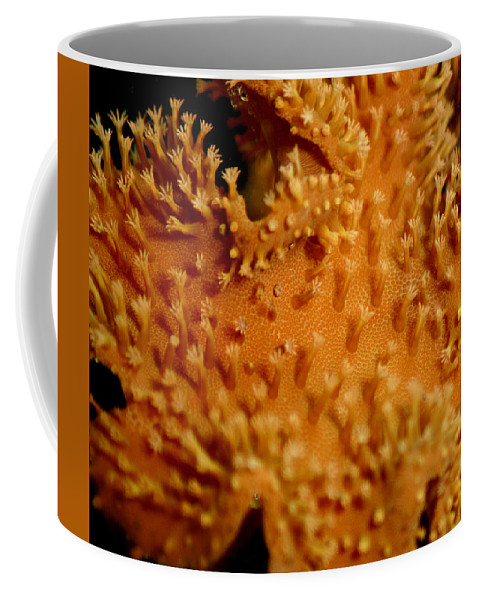 Underwater Coffee Mug featuring the photograph Leather Coral by Anthony Jones