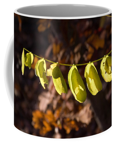 Leaves Coffee Mug featuring the photograph Leaves All In A Row by Douglas Barnett