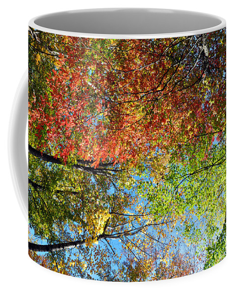 Leaves Coffee Mug featuring the photograph Leaves Of All Colors by Brittany Horton
