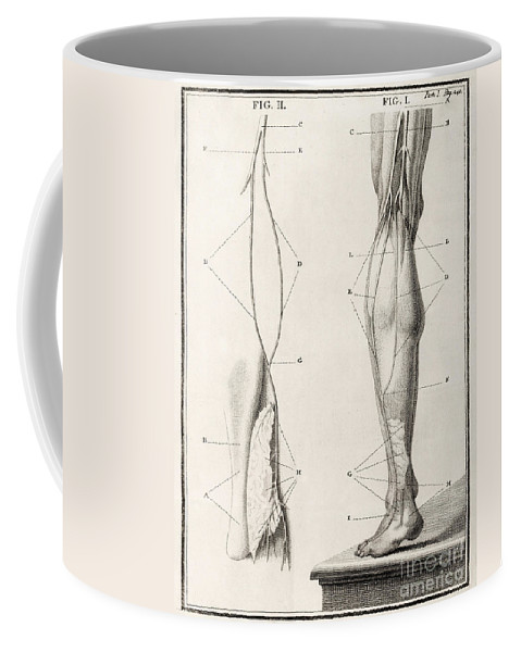 Historic Coffee Mug featuring the photograph Leg Nerve, 18th Century Illustration by Wellcome Images