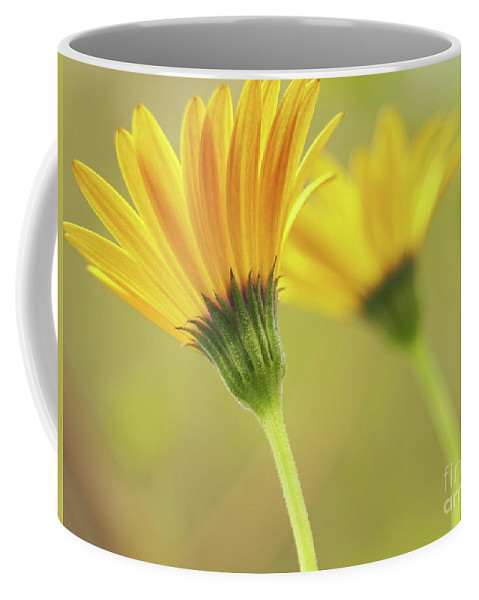 Flowers Coffee Mug featuring the photograph Lemon Symphony Echoes by Dorothy Lee