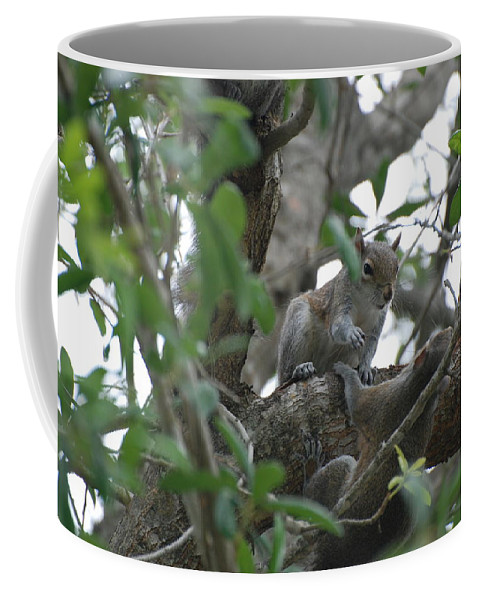 Squirrel Coffee Mug featuring the photograph Lending A Helping Hand by Rob Hans