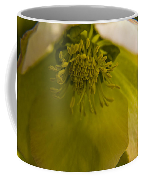 Flower Coffee Mug featuring the photograph Lenten Rose Interior by Teresa Mucha