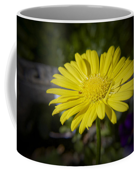 Leopard's Coffee Mug featuring the photograph Leopard's Bane by Teresa Mucha