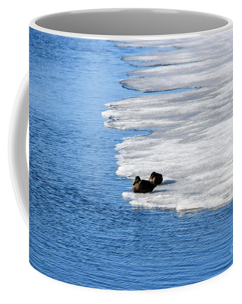 Ducks Coffee Mug featuring the photograph Let Sleeping Ducks Lie by William Tasker