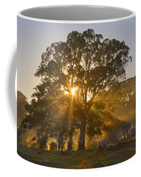Tree Coffee Mug featuring the photograph Let There Be Light by Mike Dawson