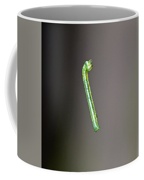 Caterpillar Coffee Mug featuring the photograph Levitating Caterpillar by Kenneth Albin