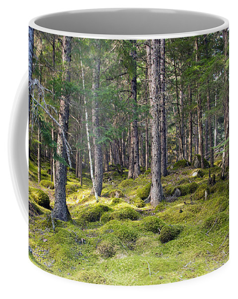 Spruce Coffee Mug featuring the photograph Lichen Covered Mountain Floor by Allan Levin