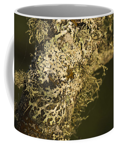 Astoria Coffee Mug featuring the photograph Lichens In Oregon by Robert Potts