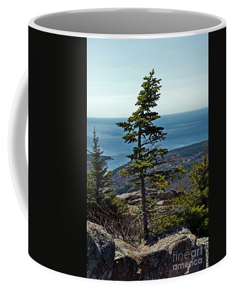 Nature Coffee Mug featuring the photograph Life At 1530 Feet Absl by Skip Willits