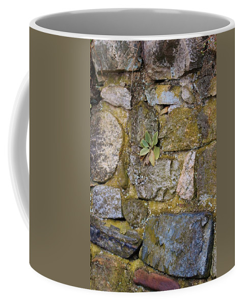 Karen Silvestri Coffee Mug featuring the photograph Life In The Wall by Karen Silvestri