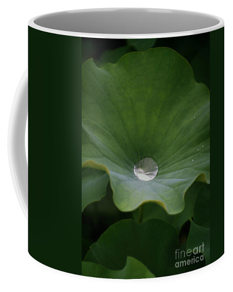 Plant Coffee Mug featuring the photograph Life by Richard Rizzo