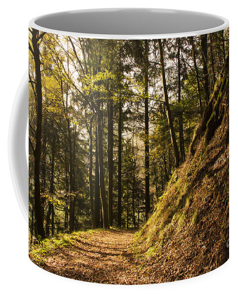 Nature Coffee Mug featuring the photograph Light In The Woods by Mirko Chianucci