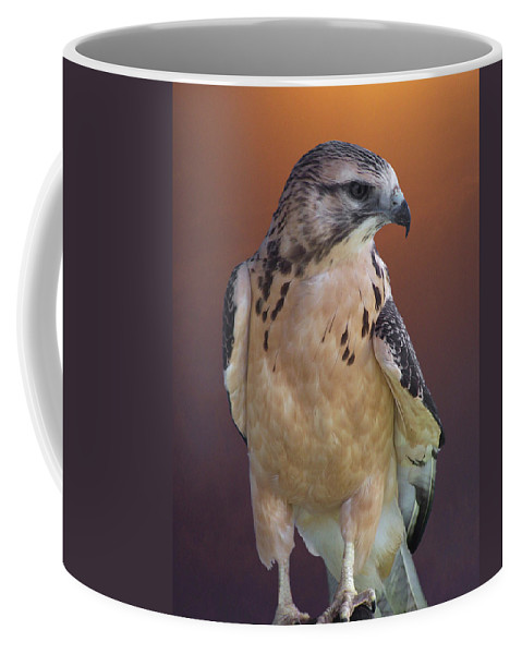 Light-morph Immature Swainson's Hawk Coffee Mug featuring the photograph Light Morph Immature Swainsons Hawk by Ernie Echols