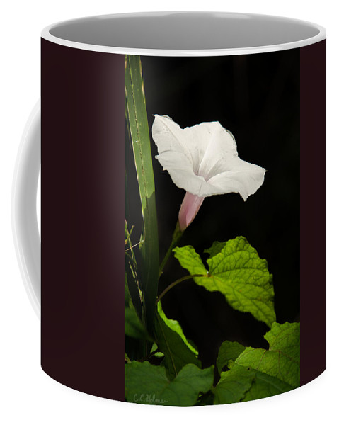 Flower Coffee Mug featuring the photograph Light Out Of The Dark by Christopher Holmes