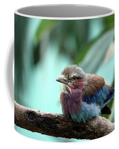 Bird Coffee Mug featuring the photograph Lilac Breasted Roller by Karol Livote