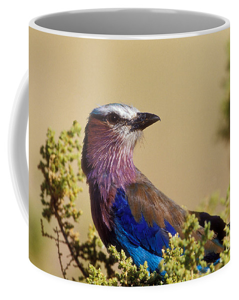 Lilac Breasted Roller Coffee Mug featuring the photograph Lilac Breasted Roller by Sandra Bronstein