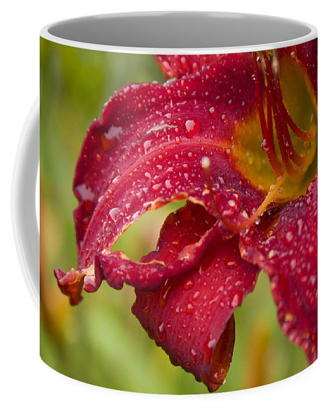 Lilly Flower Bright Garden Rain Drop Droplete Red Dark Yellow Water Coffee Mug featuring the photograph Lilly After Rain by Andrei Shliakhau