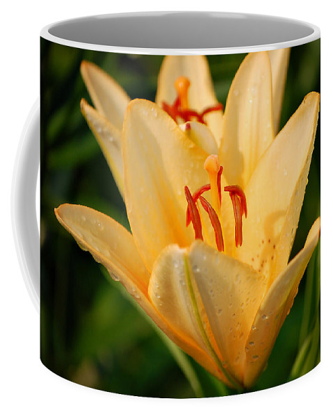 Lilly Coffee Mug featuring the photograph Lilly by Angie Tirado