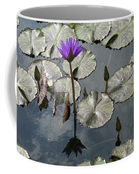 Lilly Pond Coffee Mug featuring the photograph Lilly Pond by Barry Glick