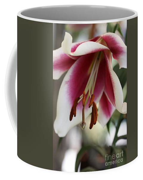 White Pink Coffee Mug featuring the photograph Lily Beauty by Christiane Schulze Art And Photography