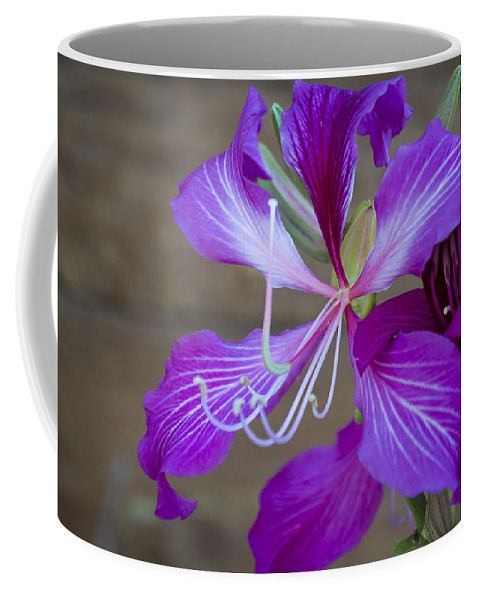 Lily Coffee Mug featuring the photograph Lily by Dennis Reagan