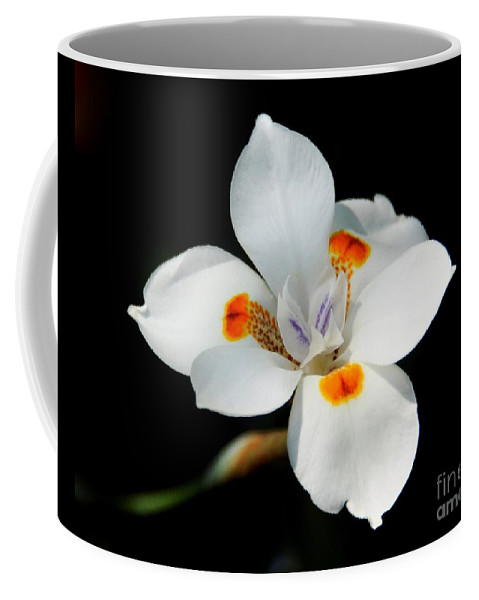 Lily Fusion Coffee Mug featuring the photograph Lily Fusion 3 by Lisa Renee Ludlum