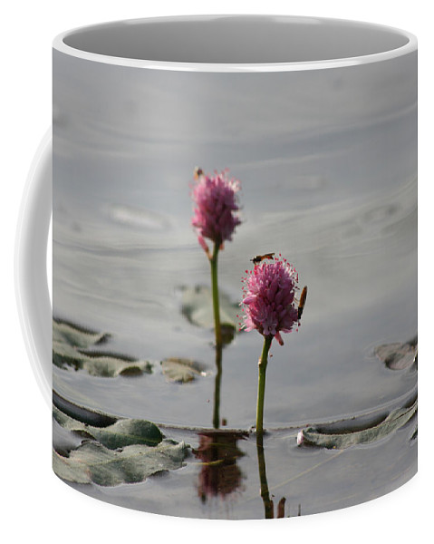 Wasp Lilypads Water Lake Plants Nature Wild Bugs Pink Flower Coffee Mug featuring the photograph Lilypads And Wasps by Andrea Lawrence
