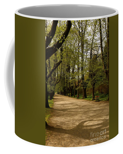 Linden Tree Coffee Mug featuring the photograph Linden Tree Alley by Christiane Schulze Art And Photography