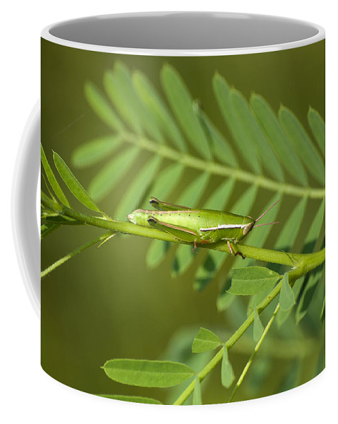 Grasshopper Coffee Mug featuring the photograph Linear Winged Grasshopper by Kenneth Albin