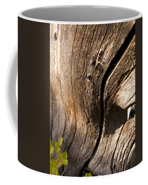 Landscape Coffee Mug featuring the photograph Lines Of Nature by Jeffery Ball