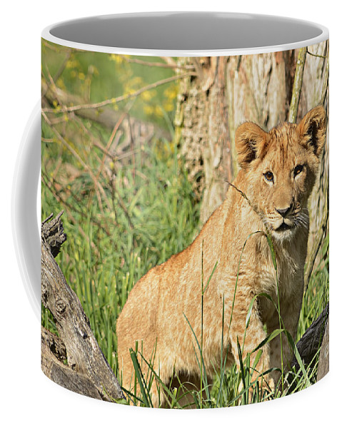 Adorable Coffee Mug featuring the photograph Lion Cub 2 by Marv Vandehey