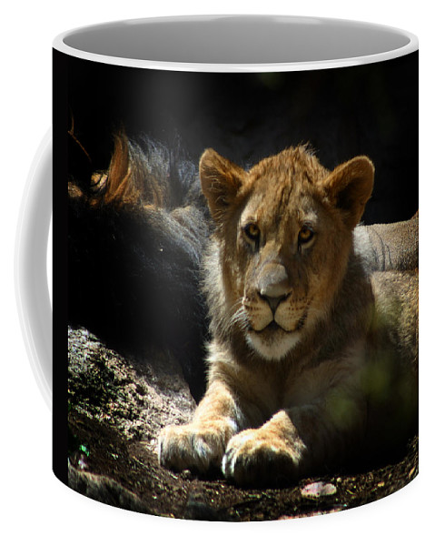 Lions Coffee Mug featuring the photograph Lion Cub by Anthony Jones
