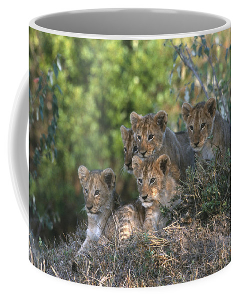 Lions Coffee Mug featuring the photograph Lion Cubs Awaiting Mom by Sandra Bronstein
