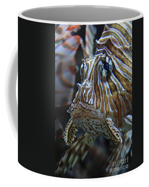 Fish Coffee Mug featuring the photograph Lion Fish Profile by Carol Groenen