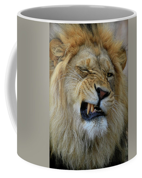Lion Coffee Mug featuring the photograph Lions Wink by Steve McKinzie
