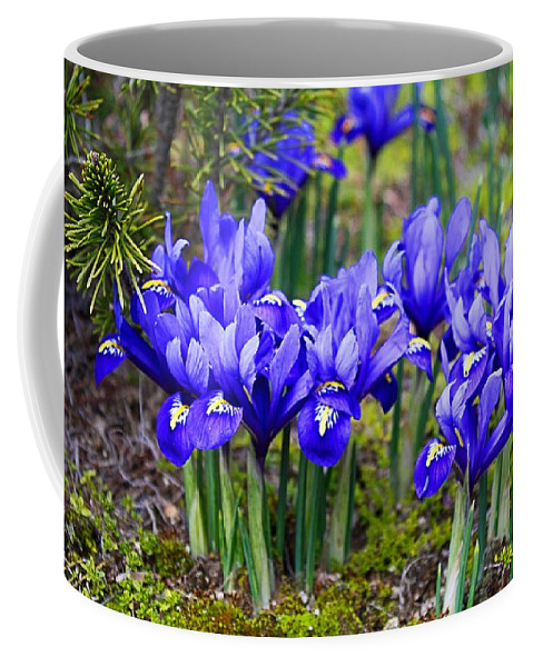 Iris Coffee Mug featuring the photograph Little Baby Blue Irises by Kathryn Meyer