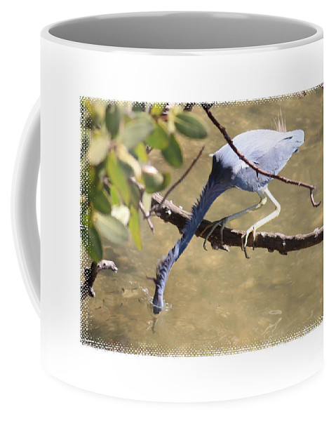 Little Blue Heron Coffee Mug featuring the photograph Little Blue Heron Going For Fish With Framing by Carol Groenen