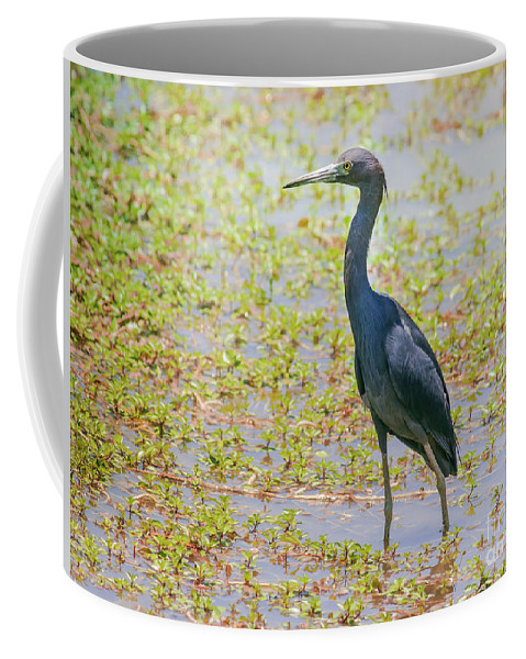 Nature Coffee Mug featuring the photograph Little Blue Heron In Weeds by Robert Frederick