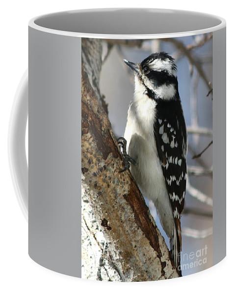 Downy Woodpecker Coffee Mug featuring the photograph Little Downy Sweetness by Angela Koehler